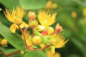 IMG_9408黄色い花加工